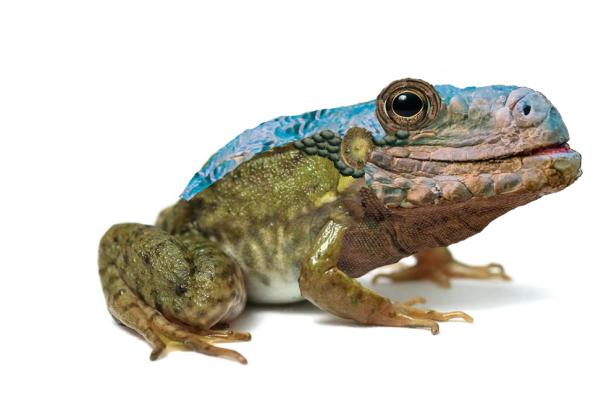 Forguana